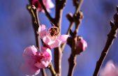 Positive Spring For Sowetans